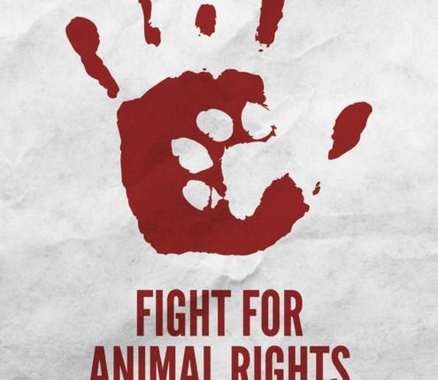 Maybe Animal Rights Advocates Can Help Save Human Lives in Saudi Arabia !!!